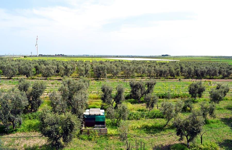 DSC_0013 Cerignola e dintorni: itinerario nei luoghi di Giuseppe Di Vittorio