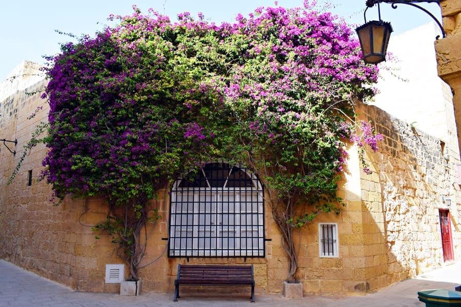DSC_0589 Mdina e Rabat: esplorando il centro di Malta