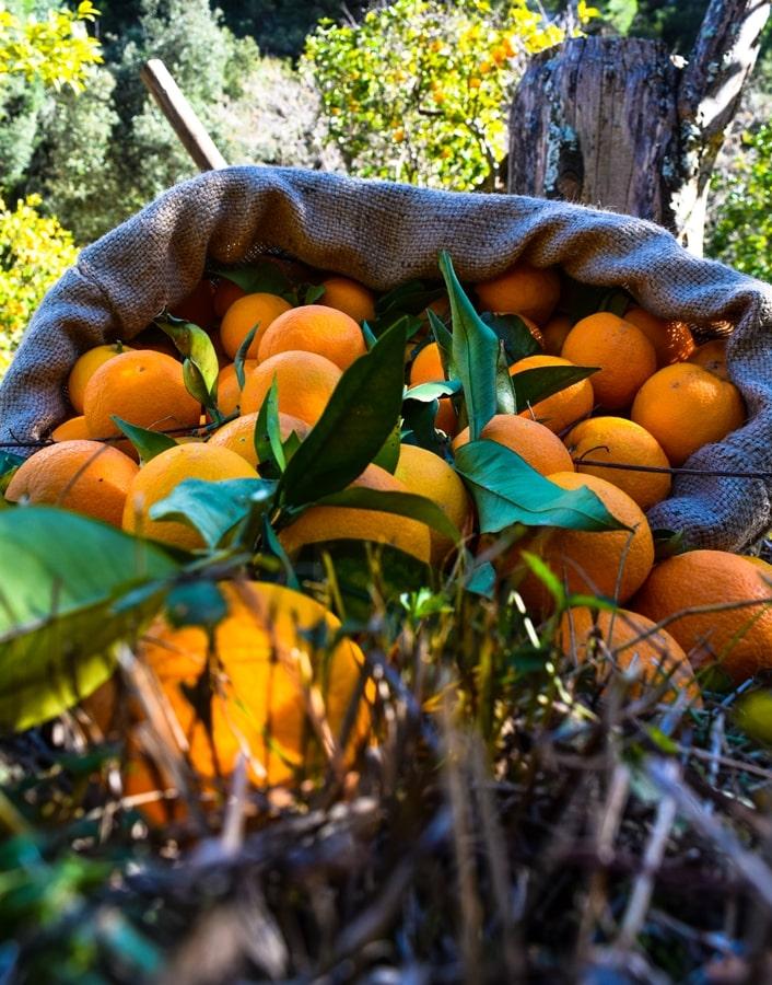 san-valentino-vico-del-gargano-arance-02 San Valentino a Vico del Gargano: la festa dell'amore e delle arance