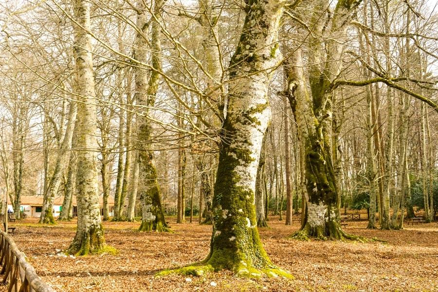 cosa-vedere-nel-gargano-foresta-umbra-03 Visitare il Gargano in inverno: un itinerario tra borghi e natura