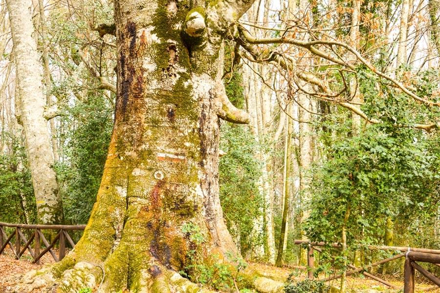 cosa-vedere-nel-gargano-foresta-umbra-04 Visitare il Gargano in inverno: un itinerario tra borghi e natura
