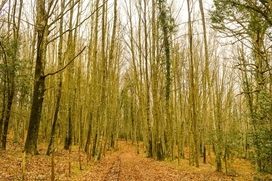 cosa-vedere-nel-gargano-foresta-umbra-05 Visitare il Gargano in inverno: un itinerario tra borghi e natura