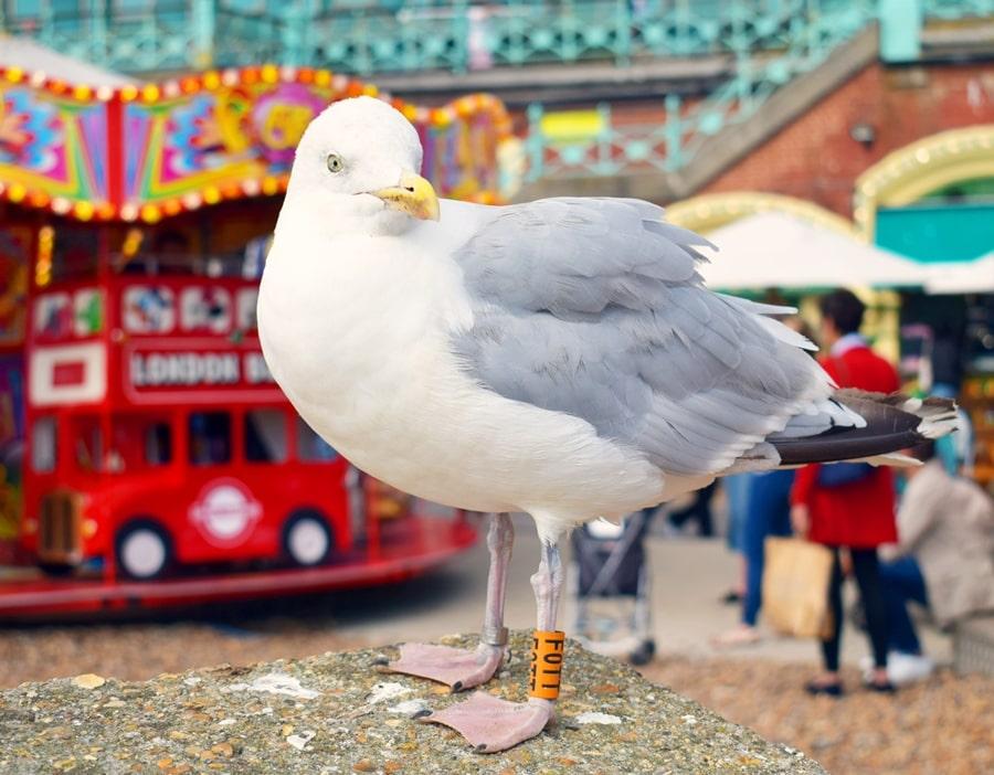 cosa-vedere-a-brighton-inghilterra-spiaggia-03 Cosa vedere a Brighton in un giorno, la più famosa città balneare inglese