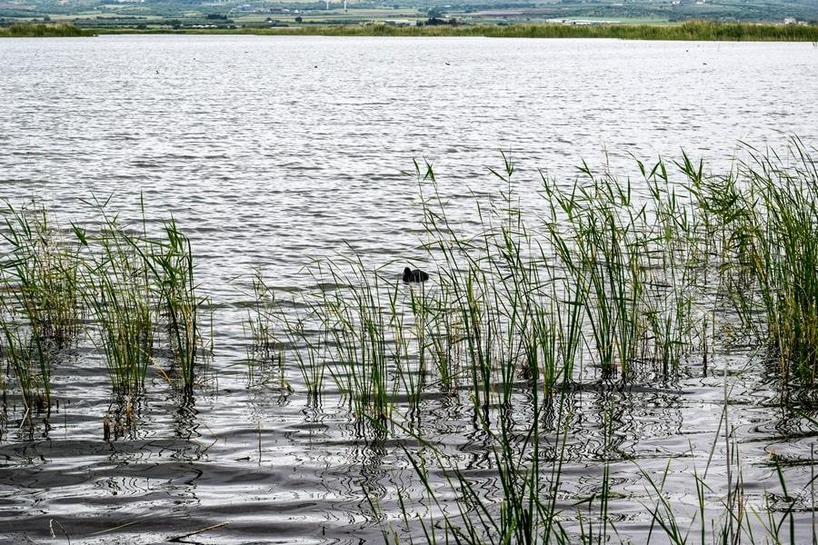 riserva-naturale-laguna-di-lesina-03 Gargano: cosa vedere sul Lago di Lesina e dintorni