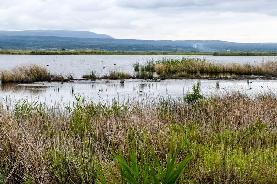 riserva-naturale-laguna-di-lesina-04 Gargano: cosa vedere sul Lago di Lesina e dintorni