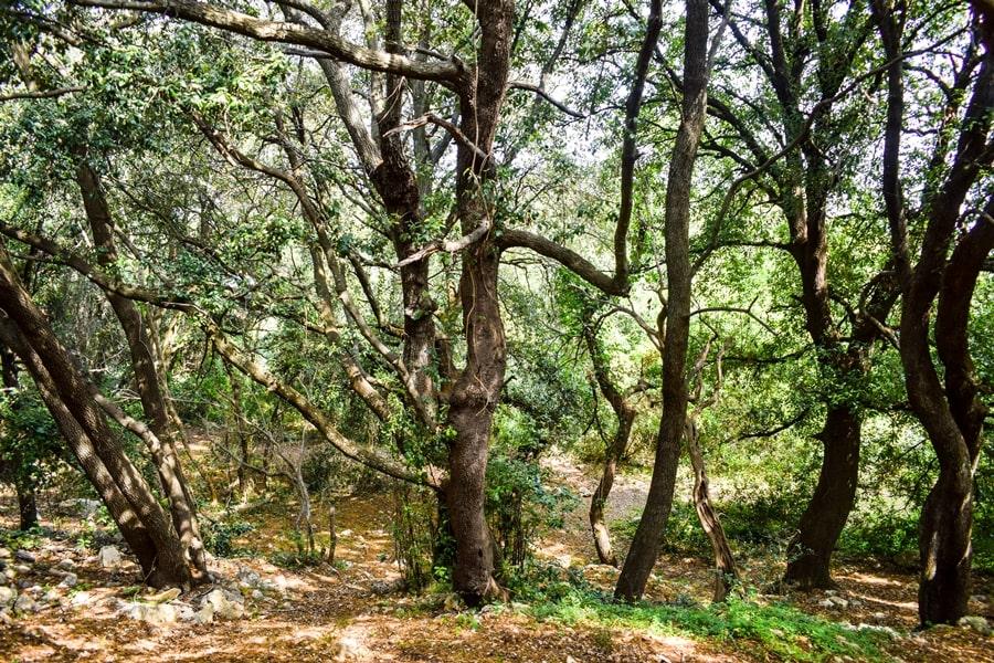 trekking-bosco-di-castiglione-conversano-torre-castiglione-03 Posti da visitare in Puglia: Conversano e dintorni