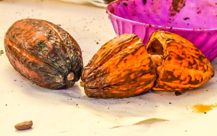 bacca-cacao-modica Chocomodica: la festa del cioccolato di Modica