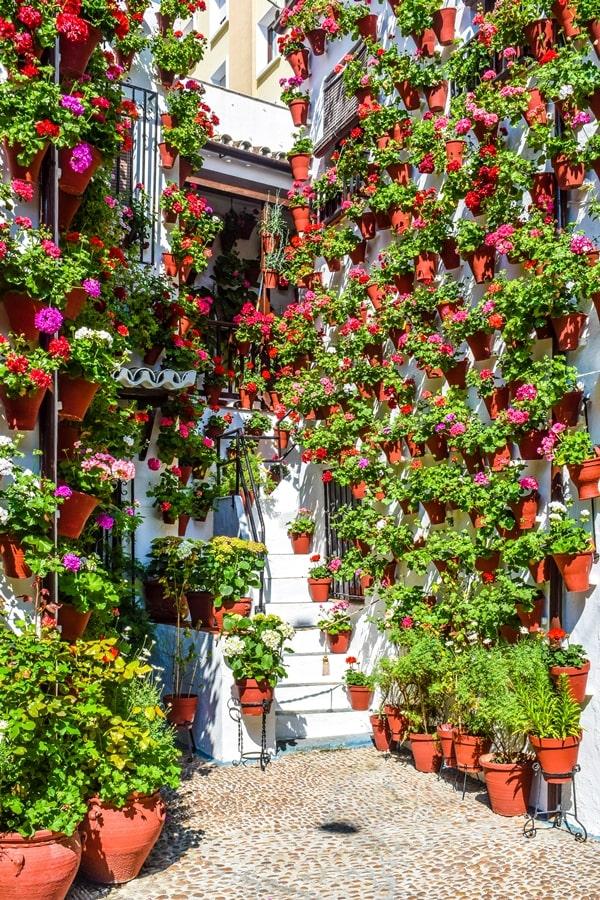 cortili-cordoba-martinderoa9-02 Cortili di Cordoba: informazioni per visitare i patios fioriti più belli