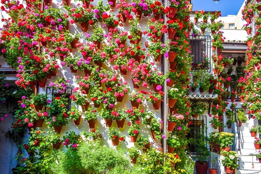 cortili-cordoba-martinderoa9-03 Cortili di Cordoba: informazioni per visitare i patios fioriti più belli