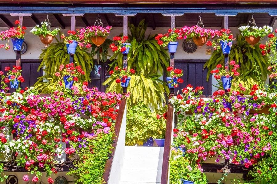 cortili-cordoba-sanbasilio44-04 Cortili di Cordoba: informazioni per visitare i patios fioriti più belli